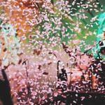 Sommer Locations in Wien 2017 – Für die besten Partys der Stadt!