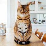 Jeder Wohnraum ein mömax-Traum: Unsere Wishlist für deine Küche!