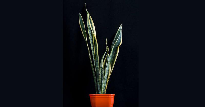 pflegeleichte Pflanzen